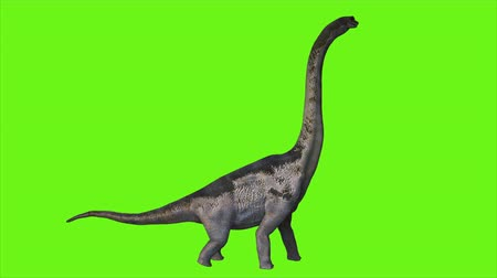 nagy : Dinosaur Braquiossauro animation on green screen. Realistic render
