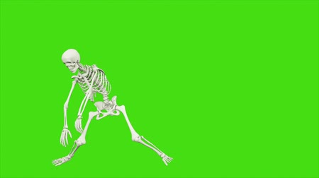 szkielet : Skeleton dancing. Seamless loop animation on green screen.