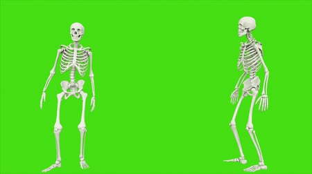 crânio : Skeleton talking. Seamless loop animation on green screen. Vídeos