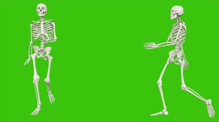 kosterní : Skeleton walk. Seamless loop animation on green screen.