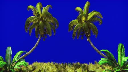 cheat : The branches of palm tree and Tropical plant in the wind on blue screen. Beautiful summer looped background.