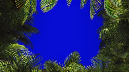 cheat : The branches of palm tree in the wind on blue screen. Beautiful summer looped background. Stock Footage