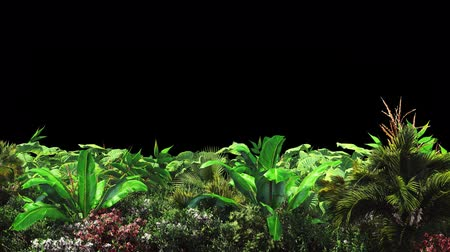 klucz : Tropical plants in the wind.With alpha channel. Codec-PNG Alpha. Beautiful summer looped background. Wideo