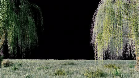 söğüt : Branches with green leaves of weeping willow and leaves fluttering in the wind with alpha channel. Looped realistic 3D animation. Stok Video