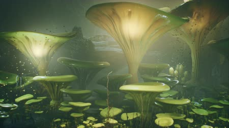 мифический : Fantasy mushrooms in a magic forest. Beautiful magic mushrooms in the lost forest and fireflies on the background with the fog. Стоковые видеозаписи