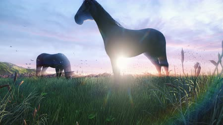 égua : Two young horses graze on a picturesque green meadow on a beautiful spring morning lit by the Golden rays of the morning sun.