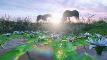 égua : Two young horses graze on a picturesque green meadow near a beautiful pond on a beautiful spring morning lit by the Golden rays of the morning sun. Looped realistic 3D animation