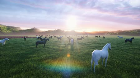 égua : A herd of young horses graze on a picturesque green meadow on a beautiful summer morning, illuminated by the Golden rays of the morning sun.