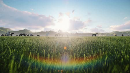 serbest : A herd of horses graze on a picturesque green meadow on a beautiful summer morning, illuminated by the Golden rays of the morning sun. Stok Video