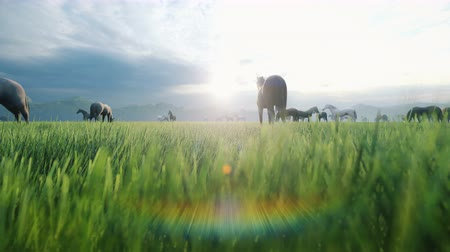 égua : A herd of horses graze on a picturesque green meadow on a beautiful summer evening, illuminated by the Golden rays of the evening sun.