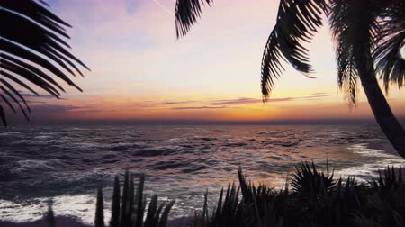 virgem : Branches of palm trees and tropical plants in the wind at sunset. Beautiful summer loop background. Vídeos