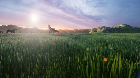 beygir gücü : A herd of horses graze on a picturesque green meadow on a beautiful spring morning, illuminated by the Golden rays of the morning sun. Beautiful summer loop background Stok Video