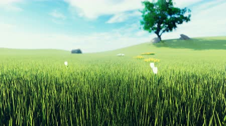 соя : Beautiful video of morning green grass, tree in the background, flowers, morning sun and clouds on blue . Beautiful summer loop background.