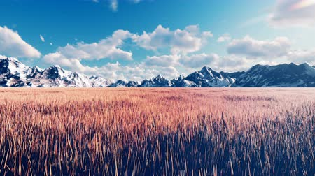 соя : Mystical view, unusual grass, blue sky with clouds, morning sun and mountains in the distance. Beautiful summer loop background.
