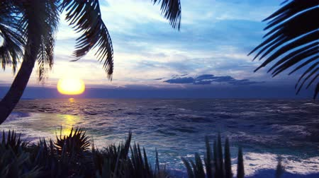 экзотичность : Branches of palm trees and tropical plants in the wind on the background of a beautiful sunset. Beautiful summer loop background.