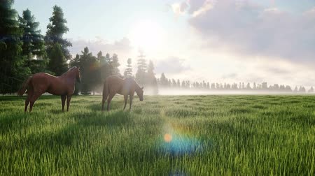 hoef : Beautiful wild horses graze in the meadow at dawn. The concept of horses. Looped Animation.