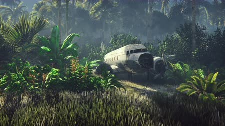 catástrofe : Wrecked plane lies in the jungle in the middle of palm trees and tropical vegetation