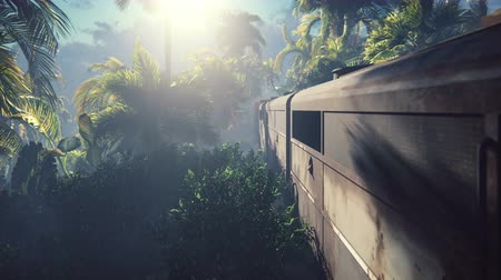 huni : The abandoned train in the jungle in the middle of palm trees and tropical vegetation Stok Video