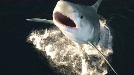 school of shark : A large shark leaps out of the water with a wide open mouth full of sharp dangerous teeth. 3d animation.