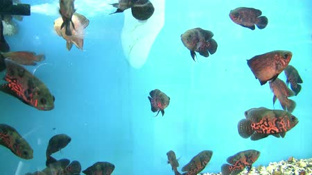 aqaba : Marine life, tropical Fish on a coral reef.  Stock Footage