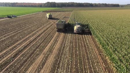 milho : Aerial view of a farmer harvesting silage Stock Footage