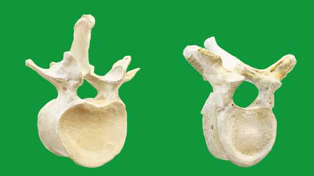 Human lumbar vertebrae motion graphics with green background Vídeos