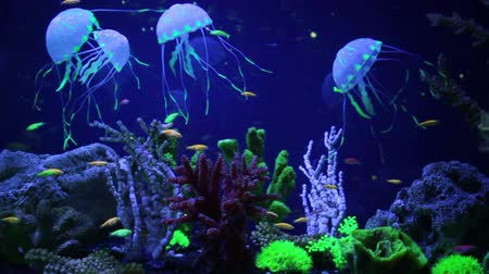 přímořská krajina : Wonderful and beautiful underwater world with corals and tropical fish. Dostupné videozáznamy
