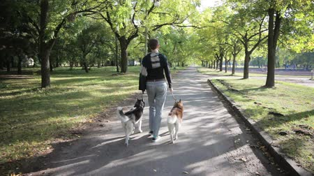huskies : Girl model walking in the park with two dogs Husky. Slow motion, view from the back.