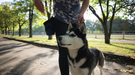 feed on : Girl owners by hand feeding husky dog