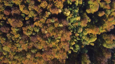 Aerial, top view from Drone: view of the forest crowns of trees from above. Autumn period.