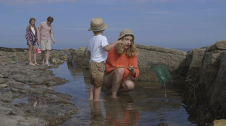father of waters : A happy young family laugh and smile together as they enjoy a day out at the beach looking in the rock pools. The little boy has picked up a net and is showing his mother what he has found. Stock Footage