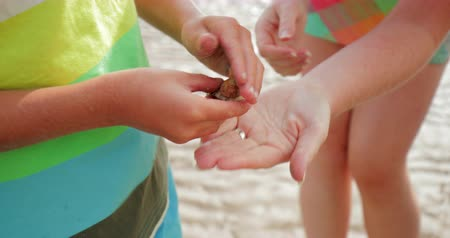 collected : Close-up of unrecognisable little boy with his mother looking through all the shells hes collected.