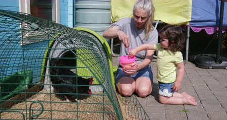 bantam : Little girl helping her grandma with the chickens. They are feeding them with food out of their little toy bucket.