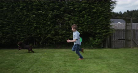front or back yard : Tracking shot of a little boy chasing his pet patterdale terrier around the garden as it has ran off with the tennis ball he was playing with.