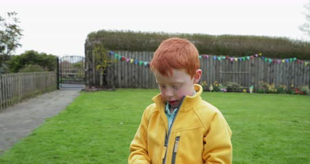 front or back yard : Tracking shot of a little boy walking with a hand full of chocolate easter eggs which he has found in the back garden. Stock Footage