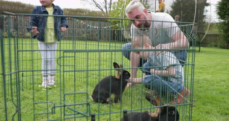 front or back yard : Father and son kneeling down next to a rabbit cage outdoors. They are feeding the rabbit some food and trying to get its attention. Stock Footage