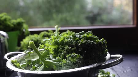 błonnik : Washed kale case with water splashes into colander on window light