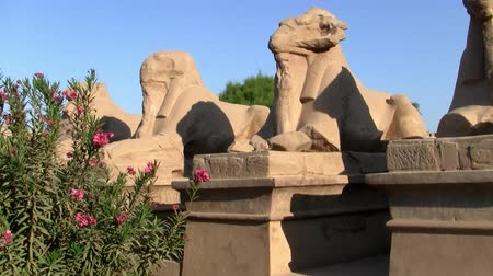 esfinge : Statues in the Alley of the Ram Headed Sphinxes at the Temple of Karnak in Luxor, Egypt on a Sunny Day