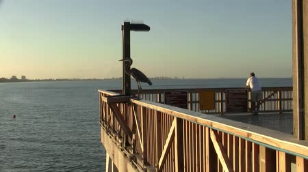 korkuluk : Bird Sitting on the Railing of Fort Myers Beach Fishing Pier at Dusk - Great Blue Heron Stok Video