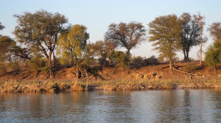 namibya : Okavango River Bank with Trees, Bush and Water Passing By, African Landscape in Beautiful Evening Light with Trees and Bush