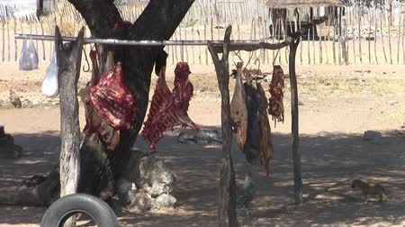 improvised : Meat Hanging on a Makeshift Stall on the Roadside in Namibia, with Poor Hygiene and Dirt, and a Chicken Pecking on the Meat