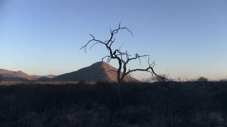 Etendero Mountain and Dry Tree Silhouette, in the Etendero Mountains, Namibia, Africa in the Evening