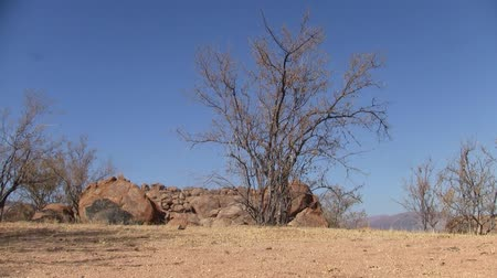 Arid Landscape with Orange Rocks and Dry Tree and Blue Sky in the Erongo Mountains, Namibia