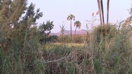 Beautiful Early Morning Landscape with Palm Trees and Shrubs in Palmwag, Namibia, Africa