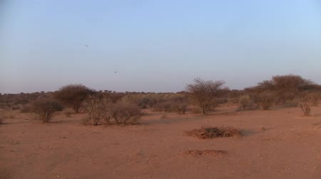 Arid Kalahari Desert Landscape with Sand and Bushes in the Dry Season, Namibia, Africa Stock Footage