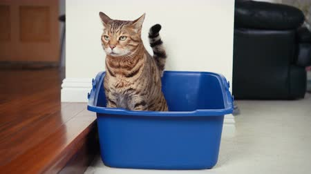 tuvalet : High Speed 4K Cat Using Litter Box. Stok Video