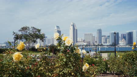4K San Diego skyline view from Coronado Centennial park with flowers on the foreground. Wideo