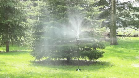 irrigate : spinning lawn sprinkler irrigated a rural yard