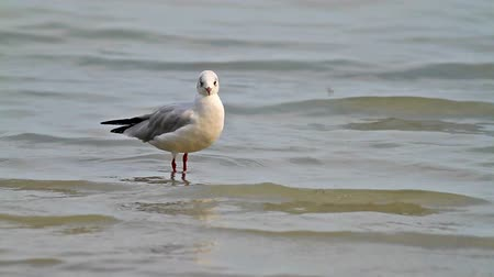 racek : Seagull in the lake