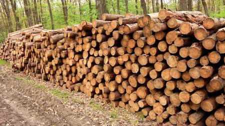rakás : Big pile of woods in a forest road